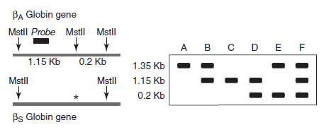 Southern blot Question-5