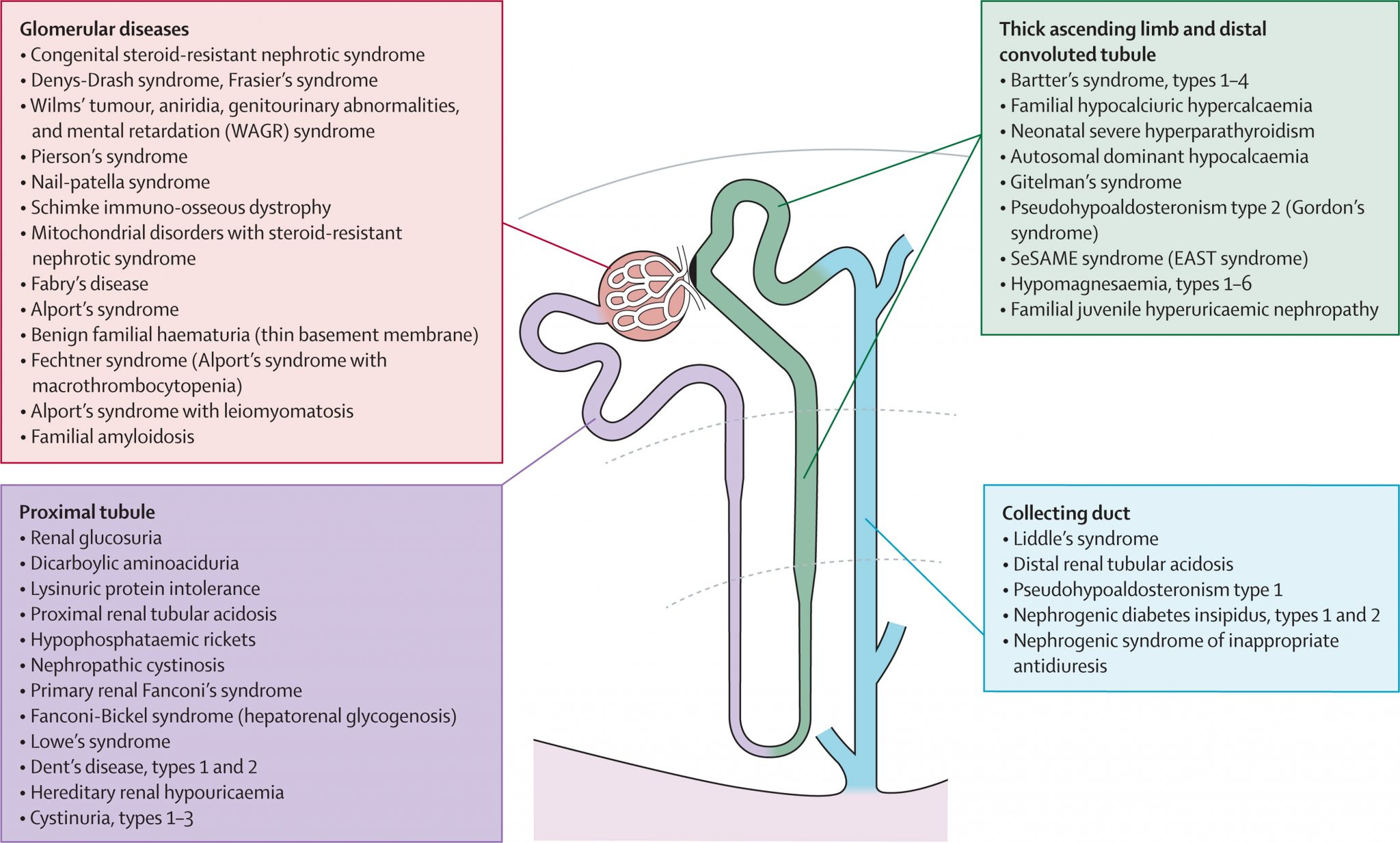 Renal Disease According To Each Part Of The Glomerulus