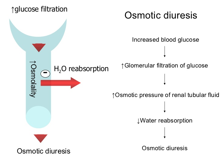 Osmotic diuretics Notes, Images And Summary