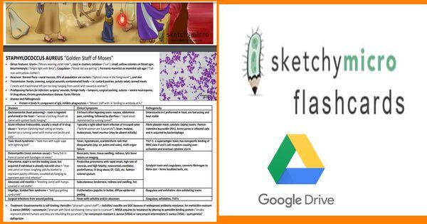 Sketchy Medical Microbiology Flashcards (Rapid Review